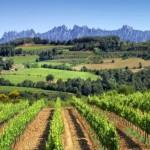 ¿Qué es el Enoturismo? También Conocido Como Turismo del Vino