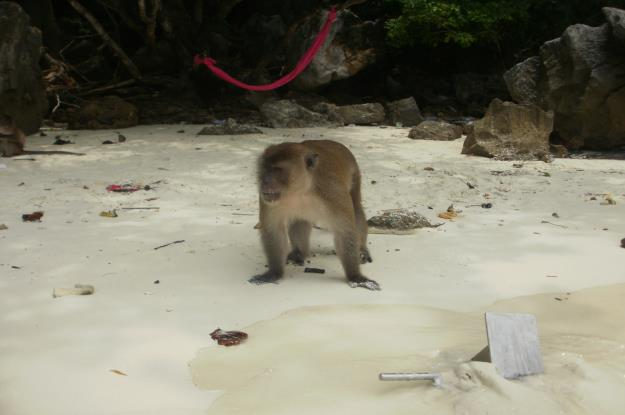 Monkey_Beach_Phi_Phi_Don