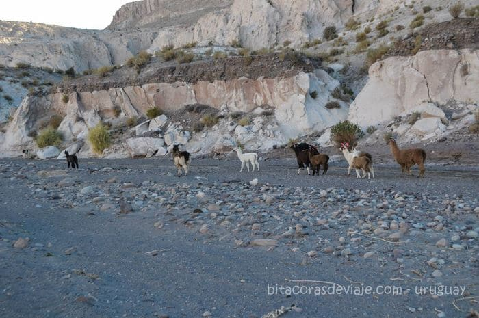 San_Pedro_Atacama_Chile_10