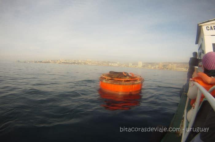 Paseo en barco Valparaiso