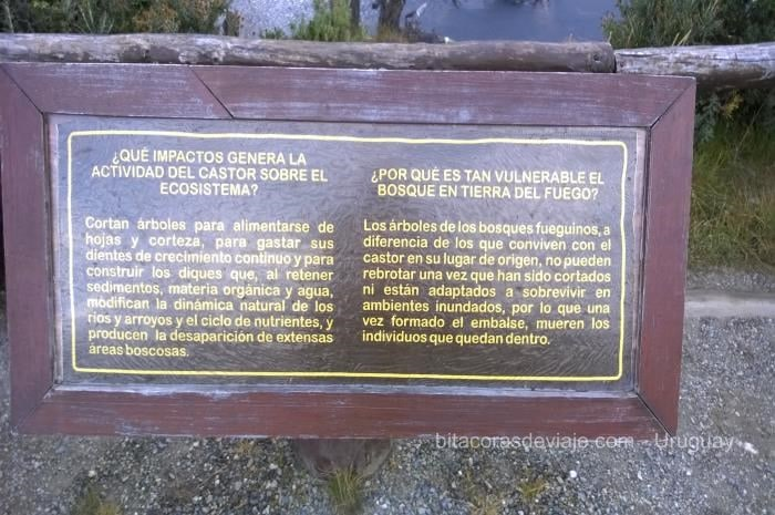 Parque_Nacional_Tierra_del_Fuego_15