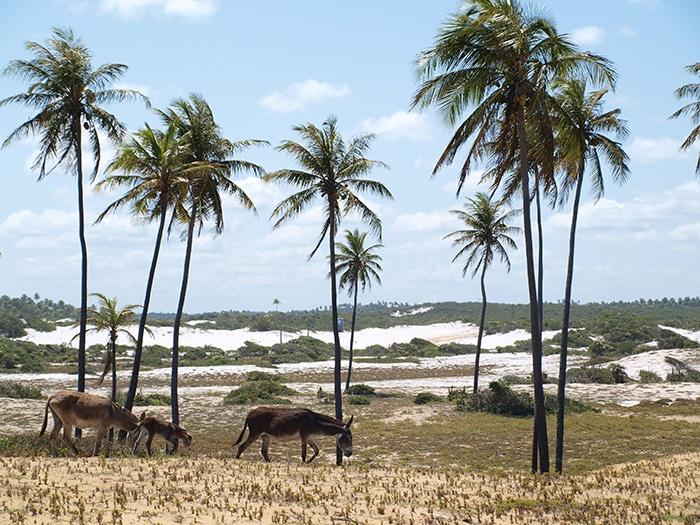 diogo-brasil-10