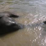 Bitácora 20, Día 2, Alrededores de Trivandrum: Centro de Elefantes y Centro de Yoga