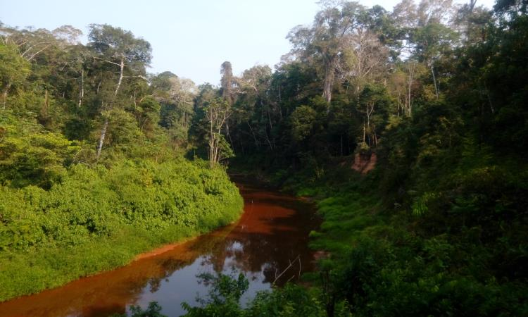 Collpa de loros en la reserva nacional tambopata