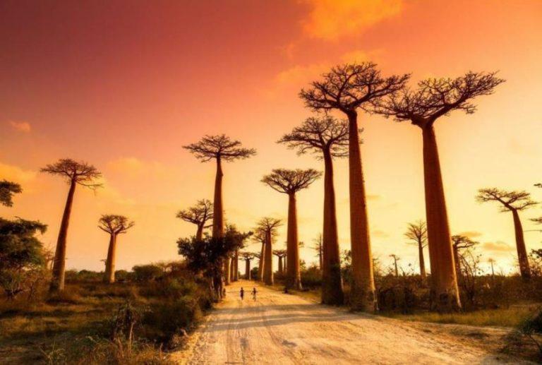 Madagascar1 (1)