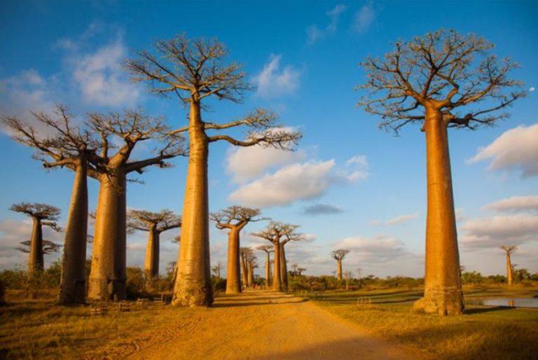 Madagascar1 (13)