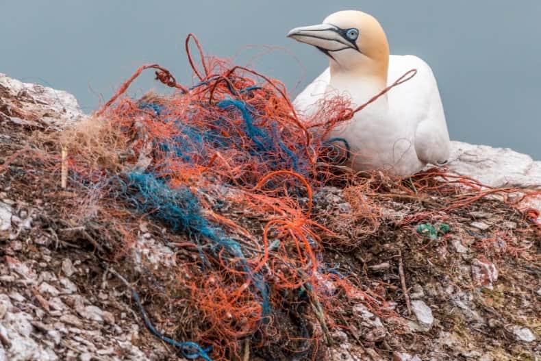 Ecosistemas dañados por los plásticos de un solo uso